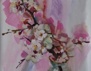 Цветущая ветка абрикоса